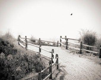 beach path, Avalon NJ 2016.