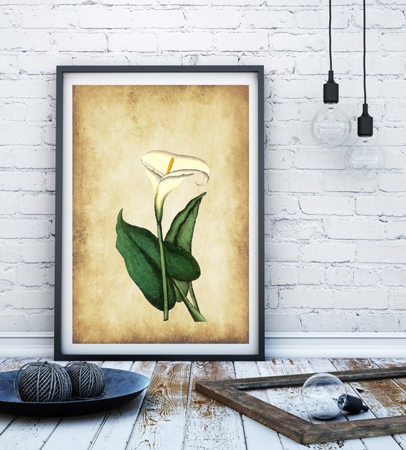 Lily print Vintage flower print lily wall art vintage wall