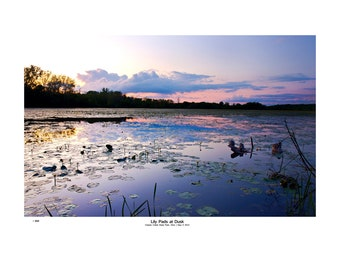 Nature Landscape Photograph, Large Wall Art, Fine Art Print by Justin Myers, Lily Pads at Dusk