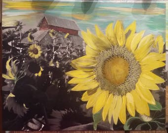 Sunflower and Old Barns