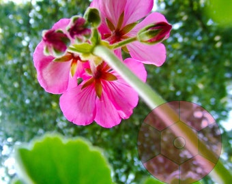 Bright Pink Back of Flower Photograph