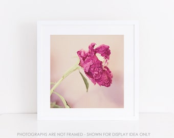 Flower Photography, Peonies, square photograph, Pink Floral, Botanical Print, Peony, Rustic Decor, Decay, Nature Photography, Still Life