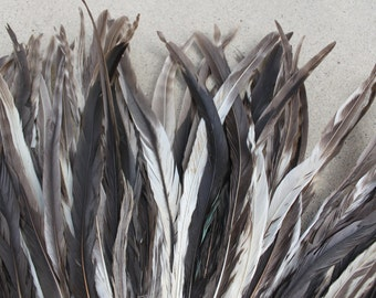 15-18 inch long Chinchilla rooster coque tails,  Tahitian costumes, rooster tail feathers, striped feathers