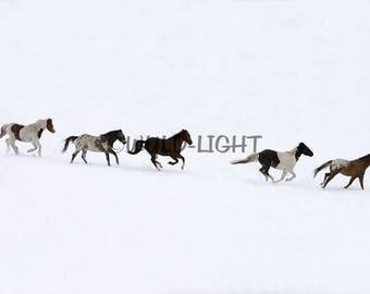 Horses Running Free in Winter, Montana! MS-7381 Horse Wall Art Home Decor Art Modern Art Animal Photography Horse Art Horse Photo
