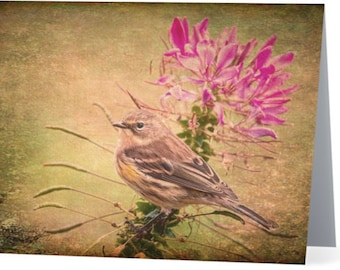 Warbler on a Pink Flower photograph - single blank note card, Gifts for bird lovers, Gifts for her, Gifts for mom, Gifts for nature lovers