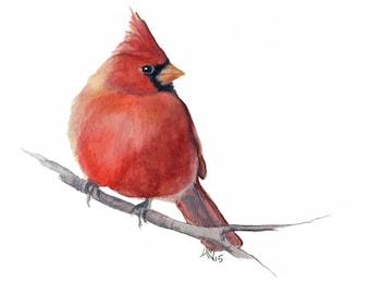 Cardinal - red bird  - 8 x 11 inch print of original watercolor