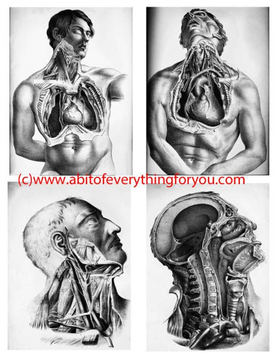 """male human anatomy art zombie printable vintage art collage sheet 4"""" x 5"""" inch clip art anatomy print graphics images digital download"""
