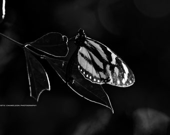 Giggling, Playful Fairy, Black & White, Photograph, Art, Wall Art, Print