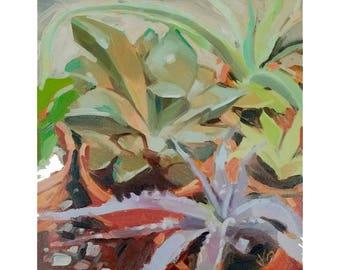 "Succulents 8""x8""  original oil painting"