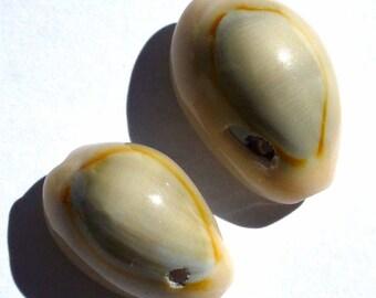 2 gray 13-14 mm cowrie shells PNP74 2 x 2