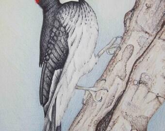 Pencil Art Work Red Headed Woodpecker Original Drawing-Print