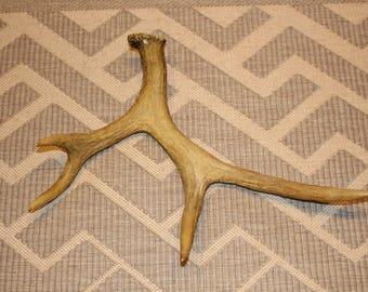 Natural deer antler Large deer antler Massive antler Natural stag antler Natural home decor Vintage woodland find