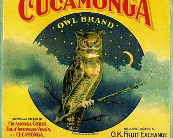 Cucamonga- Cucamonga Owl Orange Citrus Fruit Crate Box Label Art Print
