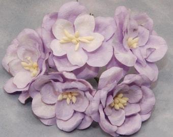 Lilac Magnolias Mag009