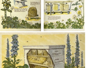 Beehives and Beekeeping Digital Collage Sheet, Bees Clipart Images, Vintage Color Illustrations, Printable Download