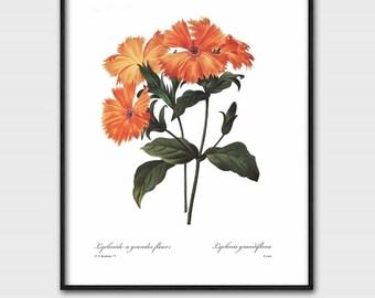 Orange Flower Art, Home Office Decor (Instant Download, Printable Wall Art, Digital Print) Pierre Redoute Botanical