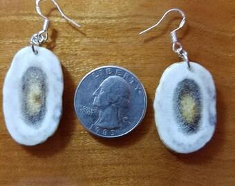 Whitetail Antler Earrings