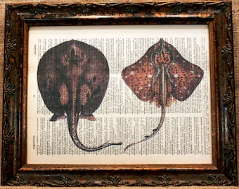 Stingrays Art Print on Vintage Dictionary Book Page