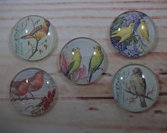 Vintage Birds Fridge Magnets, Glass Kitchen Magnets, Set of 5, Kitchen Decor, Hostess Gift, Housewarming Gift, Office Decor, Locker Magnet
