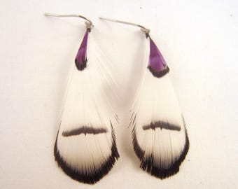 Feather Earrings A Touch of Purple wp