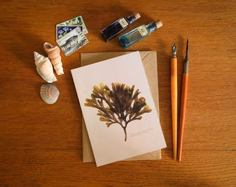 Toothed Wrack I Seaweed Card - A6 greeting card - beautiful coastal art card