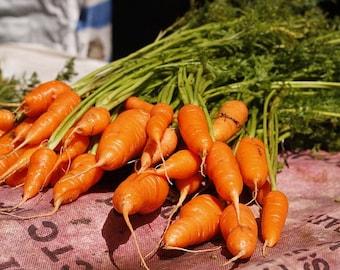 Scarlet Nantes Carrot Seeds - Half long carrot, Heirloom Carrot Seed, Organic Carrots, Non GMO Carrot, Scarlet Carrots, Veggie Seeds