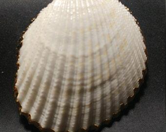 Vintage Gold Edged Large Shells pendants. 1060456