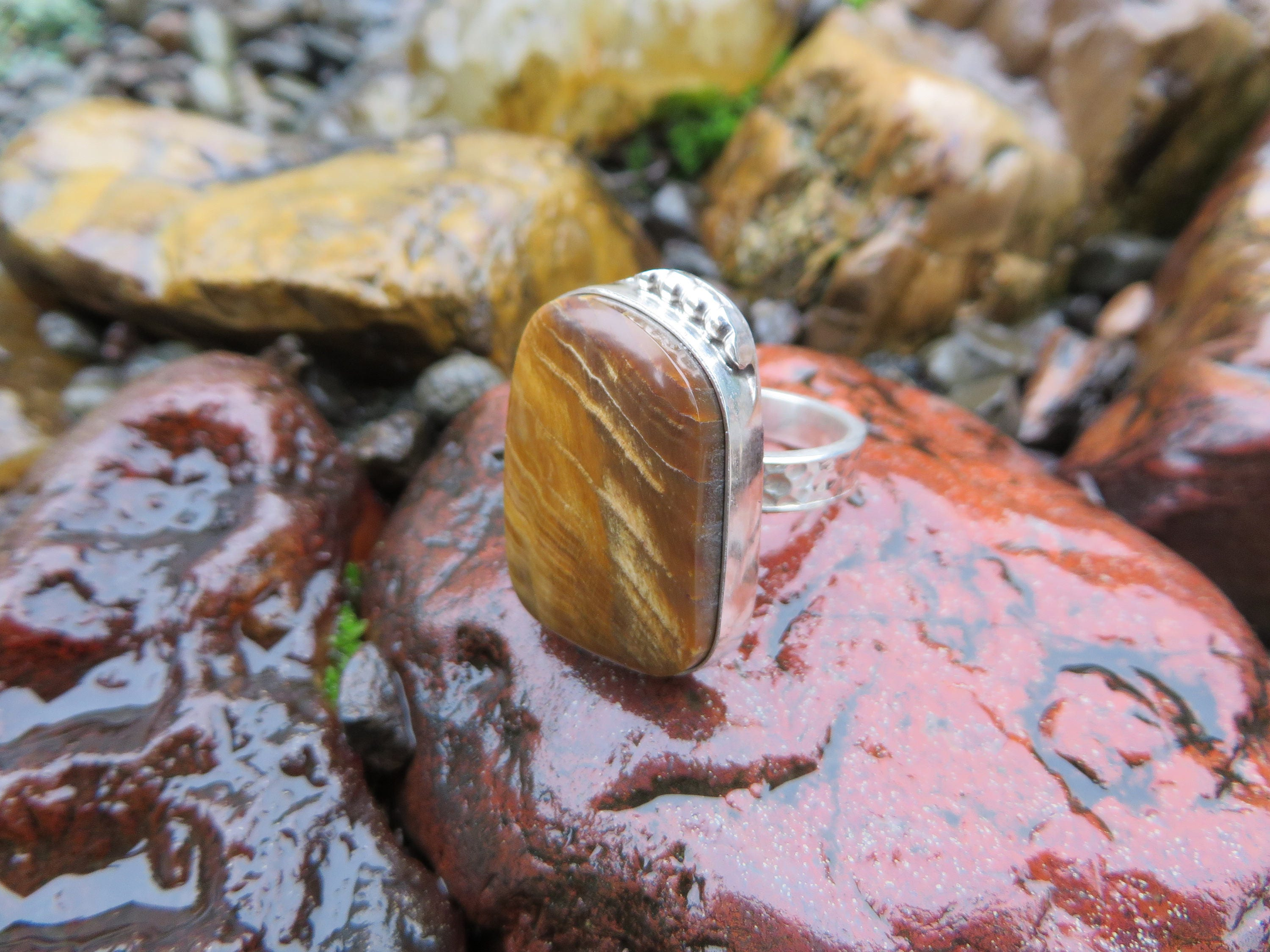 rings wedding pics engagement opal wood beautiful tree petrified fossil growth with