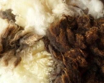 Washed Jacob wool  - Jacob wool fleece - undyed natural wool -needle felting wool -wool fleece -wet felting - spinning - animal wool roving
