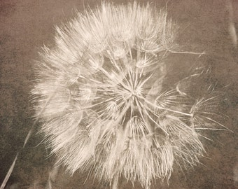 Dandelion, Floral Photo, White Flower Nature Photography, dandelions, Blooms Botanical Flowers Fine Art Photo Shabby Print Summer Home Decor
