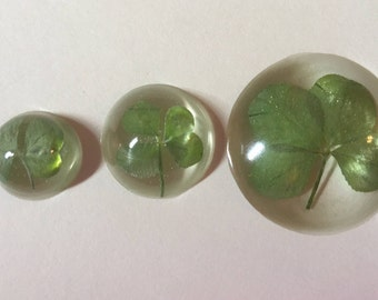 Set of 3 Real Four Leaf Clovers