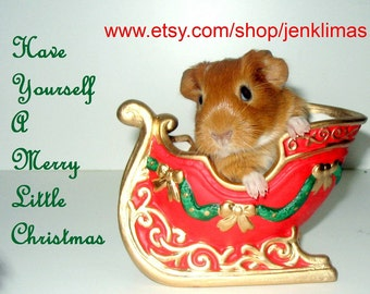 5PC GUINEA PIG Christmas Magnet Gift Set - Baby Cavy Santa Claus Reindeer & More