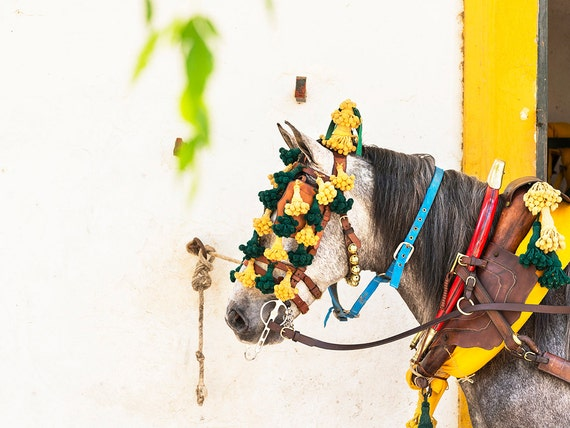 DECORATED HORSE. Jerez Horse festival, Horse Print, Equine Picture, Animal Print, Limited Edition, Photographic Print