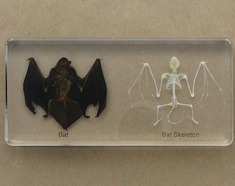 Bat and Bat Skeleton Paperweight