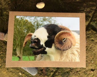 Rough fell sheep, Horned sheep card, sheep card, Easter card, Mother's Day card, birthday card, Thankyou card, blank card, just to say card,