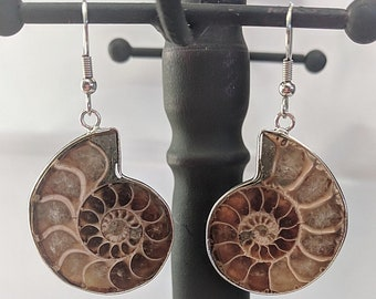 Ammonite Fossil Earrings - Healing Powers - Sacred Spiral Evolution