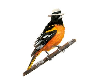 """No.7 - """"Baltimore Oriole with Panama"""" - high-quality 8x10"""" giclée fine art print, signed by artist"""