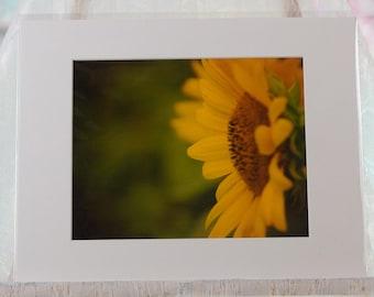 Sunflower profile photo