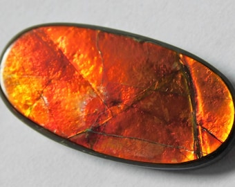 26X13X4.3 Natural Ammolite Cabochon Loose Gemstone