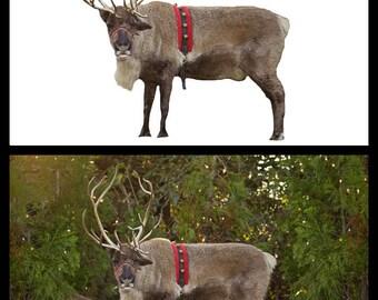 Reindeer Games Overlay + Bonus Christmas Tree Farm Background!
