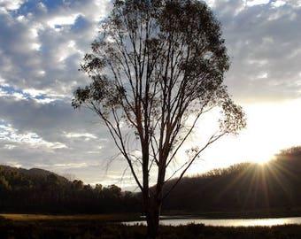 tranquil tree light