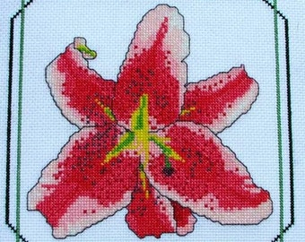The Stargazer Lily--LB03194