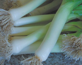 Leek Prize Taker Seed-Organic Heirloom Vegetable Seed- Non-Gmo Heirloom Vegetable Seed