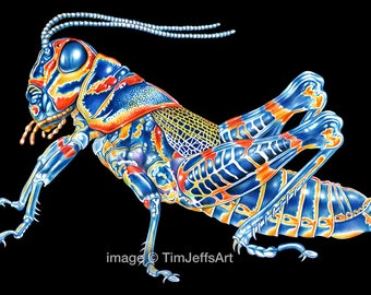 Rainbow Grasshopper Colored Pencil Drawing