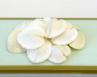 Beach Decor - Natural Heart-Shaped Shells - Set of 5 - beach weddings nautical coastal mermaid