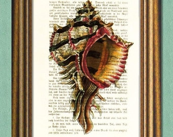SEA LIFE - SHELL - Dictionary Art Print - Nautical Print - Upcycled Antique Book Page -