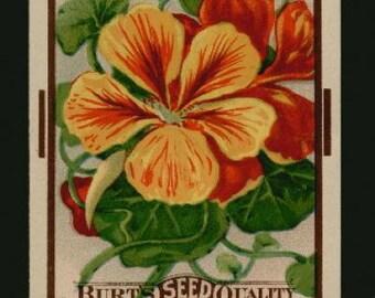 années 1910 hauteur capucine fleur jardin Antique Seed Pack Art inutilisé