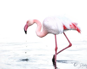 NewShopSale Flamingo 02 fine art photography print - gift droplets bird tropical art nature pastel room pink white home 4x4 4x6 10x10 12x16