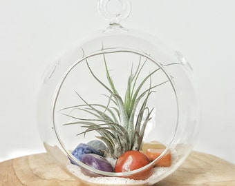 "DIY Tillandsia Air Plant and Chakra Crystals in 4.5"" Clear Glass Terrarium /Wedding Favors, Modern home decor, Housewarming Gift"