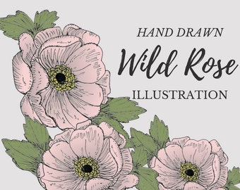 Hand Drawn Blush Wild Rose- flower clipart, flowers, plants, botanical, rustic, romantic